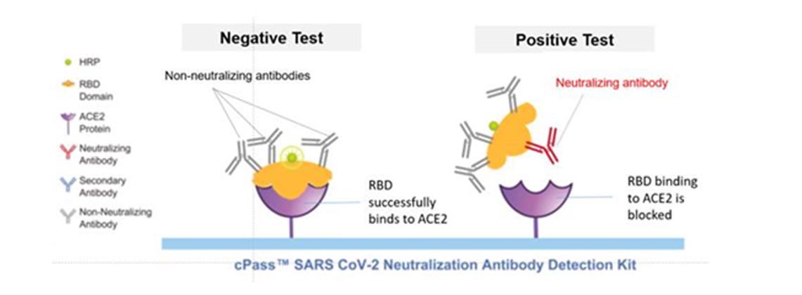 Teste para a detecção de Anticorpos Neutralizantes para SARS-Cov-2